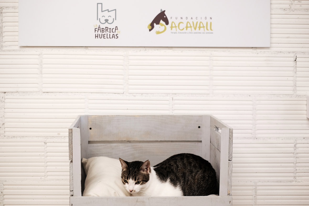 proyecto interiorismo gatoteca valencia